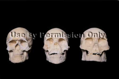 Identify race by skull shape