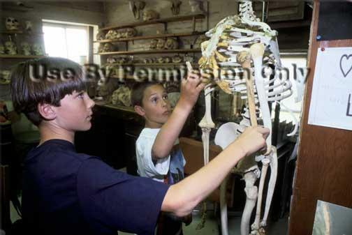 Students examine a skeleton