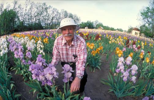 Iris Gardener